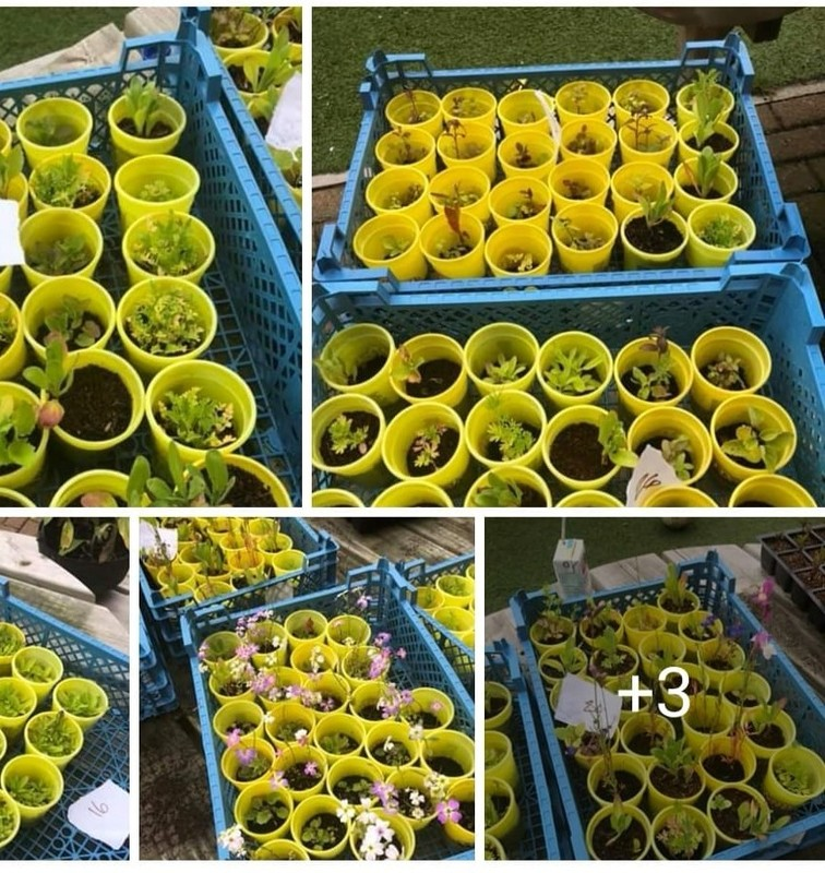Spring time growing with Play-Doh pots